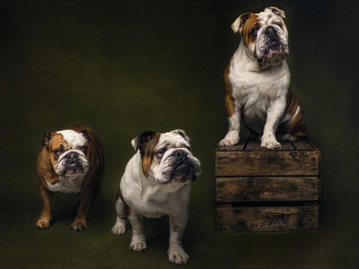 studio hondenfotografie