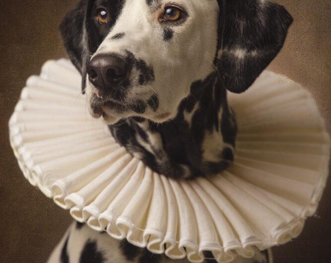 rembrandt honden portret
