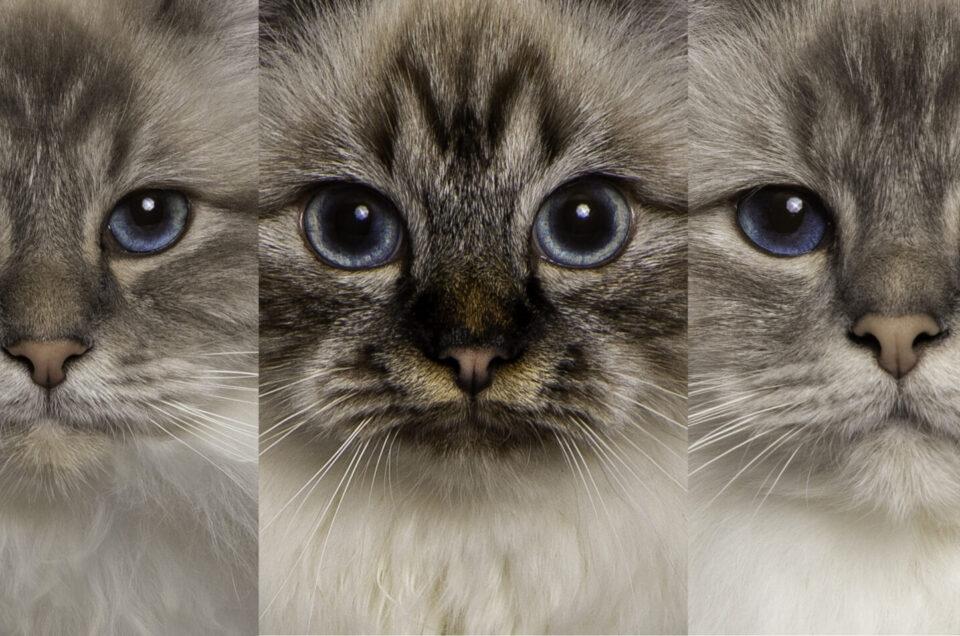 Doe je ook katten?